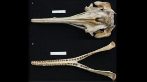 ossos-size-598