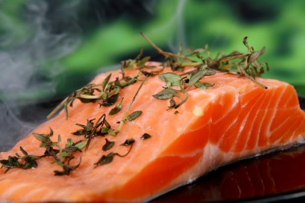 salmão de criação salmão selvagem